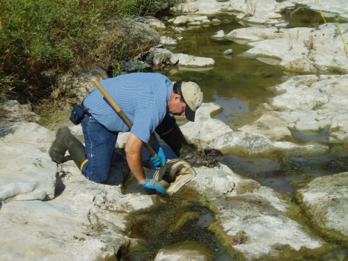 David Thomas removing organisms from rocks during bioassessment monitoring along the Ventura River (Sep. 2006)